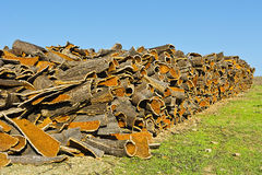Drying of Corkwood Stock Photos