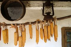 Drying Corn Royalty Free Stock Photos
