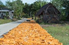 Drying corn Stock Photo