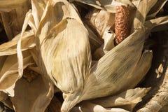 Drying corn Stock Photos