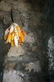 Drying corn cob on a wall of a poor village royalty free stock images