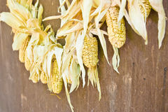Drying corn cobs Stock Images