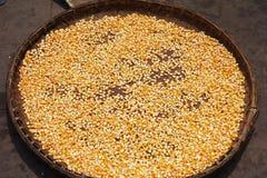 Drying corn kernel Royalty Free Stock Photos