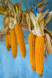 Drying corn Stock Photos