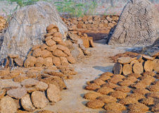 drying of cow dung cake Royalty Free Stock Photography
