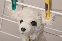 Drying dog toy Stock Photography