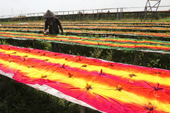 Drying fabric. Workers were drying fabric that has been given a color in Sukoharjo, Central Java, Indonesia stock photography