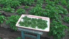 Drying finely chopped dill on the plot stock video footage