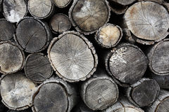 Drying firewood. Cut firewood drying in forest ready to be transporting Royalty Free Stock Images