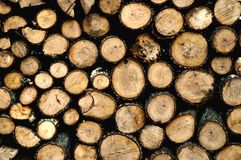 Drying FireWood. Cut fire wood drying Royalty Free Stock Photography