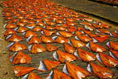 Drying fish. Filets in the sun on bamboo mats Royalty Free Stock Photography