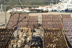Drying fish. On the beach in Nazare, Portugal Stock Image
