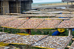 Drying fish Stock Images