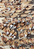 Drying fish. At the beach Royalty Free Stock Photography