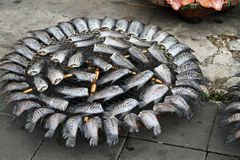Drying fish. Stock Photography