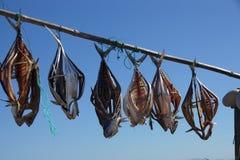 Drying fish Stock Photos