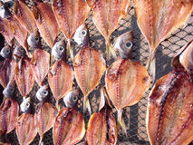 Drying fish. Fish drying in the sun.Drying fish meat Stock Image