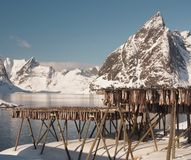 Drying fish. Alternative way to keep fish. Drying fish on Lofoten Island, Norway Stock Images