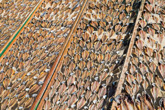 Drying fish at the beach Royalty Free Stock Images