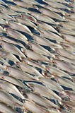Drying fish, fishbone Stock Images