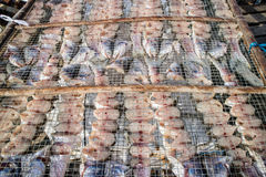 Drying fish inder the sun in China Royalty Free Stock Photo