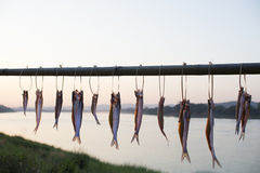 Drying fish near river Royalty Free Stock Images