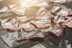 Drying fish on net Stock Images