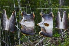 drying fish Royalty Free Stock Photos