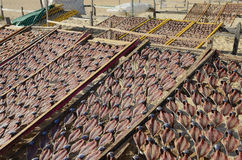 Drying Fish on Racks on the Beach Stock Images