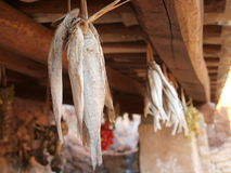 Drying fish on Sicily. Nature Reserve Mount cofano trapani Sicily royalty free stock photo