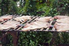 Drying fish Stock Photo