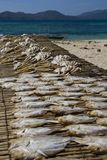 Drying fishes Royalty Free Stock Photo