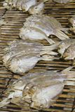 Drying fishes Stock Photography