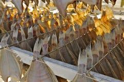 Drying Flatfish (Sole) Stock Photo