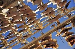 Drying Flatfish (Sole) Stock Photos