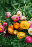 Drying flowers Royalty Free Stock Images