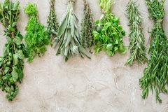 Drying fresh herbs and greenery for spice food on stone kitchen desk background top view space for text Royalty Free Stock Images