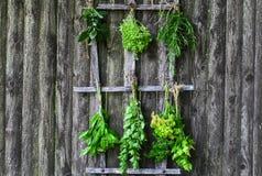 Drying fresh herbs Royalty Free Stock Photo