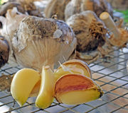 Drying garlic Royalty Free Stock Photography