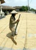 Drying grain Stock Images