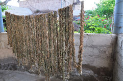 Drying grape leaves for future use. Armenia Royalty Free Stock Photo