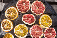 Drying grapefruits and oranges. On a drier Royalty Free Stock Image