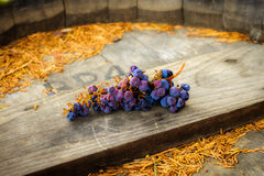 Drying Grapes. A bunch of grapes left laying on a wooden wine barrel. They are plump, purple, and blue. Partially dehydrated, they are on their way to becoming Royalty Free Stock Photography