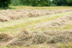 Drying grass Stock Images