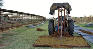 Tractor And Rack Shaker On Drying Green. Stock Photo