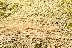 Drying hay Royalty Free Stock Photography