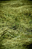 Drying hay Royalty Free Stock Images