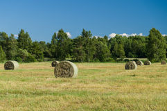 Drying haystacks under blue sky Stock Images