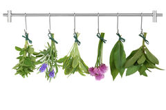 Drying Herb Bunches Stock Photos