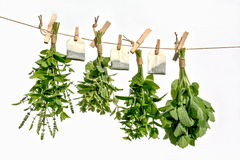 Drying herbs stock image